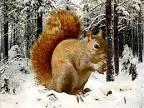презентация животные зимой