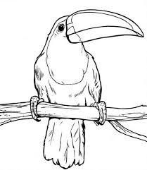 Small Picture Toucan Holding a Piece of Paper Coloring Page Toucan Holding a