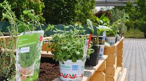 office gardening. Perfect Gardening According To An Old German Folk Wisdom U0027May Makes Everything Newu0027 We Want  Follow This Saying And Start Our Second Campaign On Health Which Will Focus  To Office Gardening C
