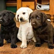 Последние твиты от brown dog coffee co (@browndog_coffee). 3 Month Coffee Club 2lb Brown Dog Coffee Company