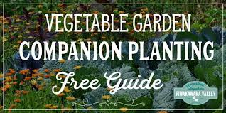 Vegetable Companion Planting Charts Companion Planting Chart For Vegetables And Herbs Growing