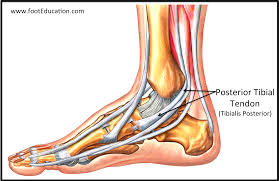 Tendon Disorders of the Foot and Ankle | OrthoPaedia