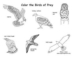 Small Picture Birds Free Coloring Pages For Kids Page 0 Kids Coloring