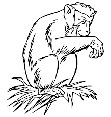 Small Picture Free Baboon Coloring PagesBaboonPrintable Coloring Pages Free