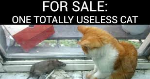 For Sale: One Totally Useless Cat | WeKnowMemes via Relatably.com