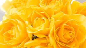 En Couleurs Imprimer Nature Fleurs Num Ro 511974