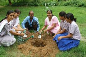 tree plantation and environment essay contest tree planting programs environmental essays and research