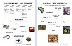 Animals and Their Characteristics (Free Worksheet) - Homeschool Den