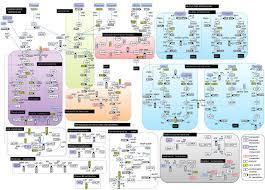Metabolic Pathways Chart Glucose Metabolism Diagram Metabolic Pathway Reminds