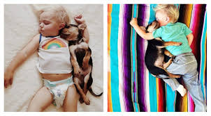 puppy love a photo essay of a boy and his puppy napping news puppy love a photo essay of a boy and his puppy napping