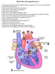 heart diagram  blood and heart on pinterestblood flow through the heart diagram and written steps