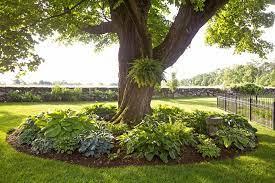 a gardener s guide to hostas better