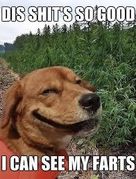 Dog Can See Farts Meme   Slapcaption.com   Funnier than hell ... via Relatably.com