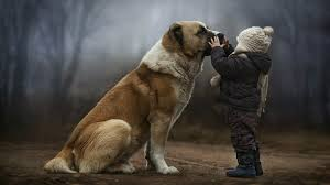 Image result for child and dog