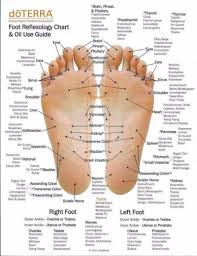 Itec Reflexology Blank Foot Chart 31 Printable Foot Reflexology Charts Maps Template Lab