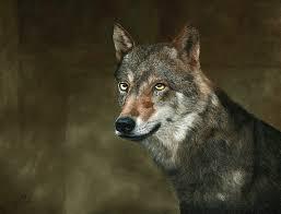 Native American Zodiac Series - Wolf Mixed Media by Wendi OBrien