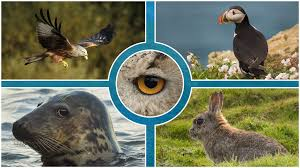 the best mirrorless s for wildlife and bird photography 2019 round up