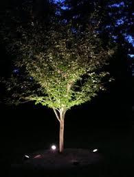 outdoor tree lighting ideas. Tree Uplighting Ideas Outdoor Tree Lighting Ideas