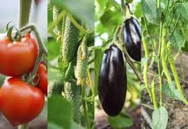 Eggplant Companions Learn About Companion Planting With