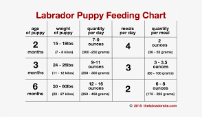 Labrador Puppy Growth Chart Food Anta Expocoaching Ray