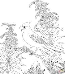 Birds Coloring Pages Northern Cardinal Free 10371181 Attachment