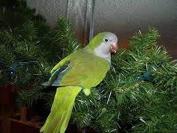 parrots make terrible presents