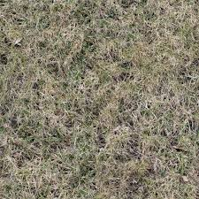 Seamless dead grass texture with green fresh leaves SF Textures