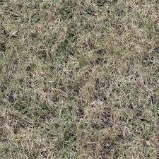 dirt grass texture seamless. Seamless Dead Grass Texture Long Weed Plant Autumn Lawn Dry Leaves Green Foliage Spots Dirt