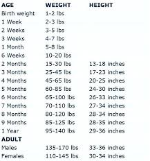 Pregnancy Weight Gain Week By Week Chart Weeks Of Pregnancy Chart Pregnancy Due Date Calculator