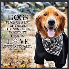 Dog Quotes Inspirational New 48 Inspirational Dog Quotes Quotes Pinterest Dog Animal And