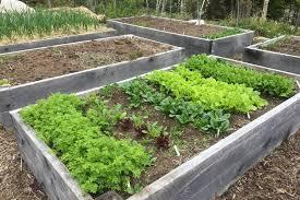 planting your veggie garden