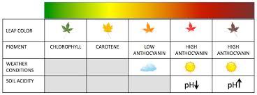 18 Memorable Weed Leaf Color Chart