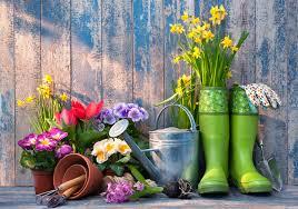 Top 10 tips to prepare your garden for spring | Thompson & Morgan