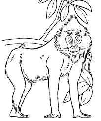 Small Picture Baboon Coloring Page Adult Coloring Pages Pinterest Adult