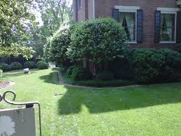 206 best Evergreens for Small Yards images on Pinterest   Small ...