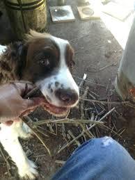 dog safe trash can ceedannualconference com