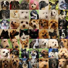 lots of dogs together. Delighful Lots Lots Of Pets3 And Lots Of Dogs Together T