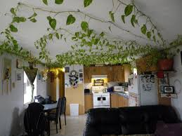 Full Size of Home Design:house Plants Vines With Ideas Photo House Plants  Vines With ...