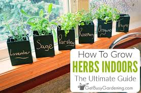 growing herbs indoors a step by step