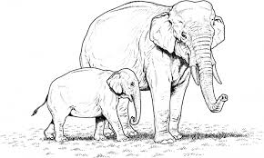 Small Picture Baby Elephant Coloring Page Free Download