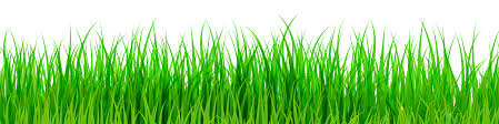 grass png.  Grass Green Grass PNG Clip Art With Png ClipartPNG