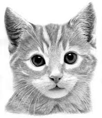 realistic cat drawing in pencil. Wonderful Pencil Art Pencil Drawings  Kitten Drawing By Ronny Hart  Fine Art Prints  And Posters In Realistic Cat Pencil I