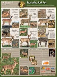 Fawn Age Chart How Accurate Is That Qdma Aging Chart Huntingnet Com