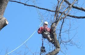 Tree Risk Assessment Waynesboro Va Vtm Arborists