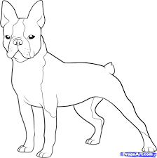 Small Picture Boston Terrier Coloring Page Coloring Home