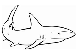 Small Picture Shark Coloring Sheets Printable Shark Coloring Pages Sea Animals