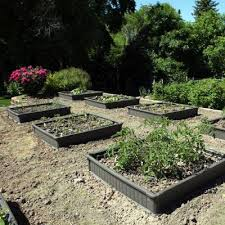 raised garden bed kit 2 beds 1 enclosure