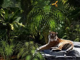 Windows Wallpapers — HD tiger jungle ...