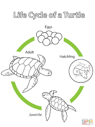Small Picture Life Cycle of a Turtle coloring page Free Printable Coloring Pages