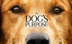 Best Quotes From A Dog's Purpose